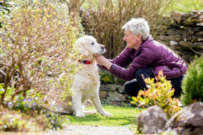 If you are looking for a dog minder, Barking Mad Ireland have the perfect solution